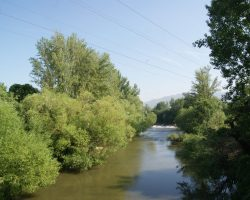 Vegetación de ribera del río Arga.