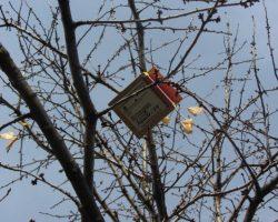 Caja nid para páridos
