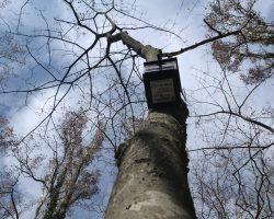 Caja nido de Autillo europeo