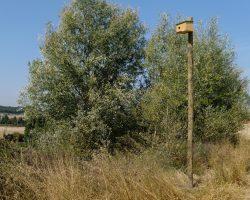 Caja nido de Cernícalo vulgar 02