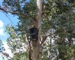 Caja nido de autillo europeo en el parque de los sentidos