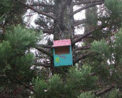 Caja nido de petirrojo europeo