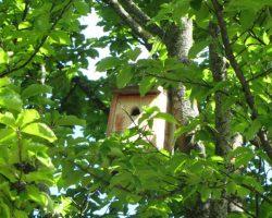 Caja nido en el Parque de la Taconera.