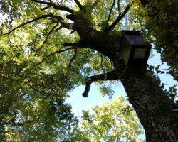 Caja nido para Cárabo común