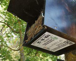 Caja nido para autillo europeo con nido de carbonero comun