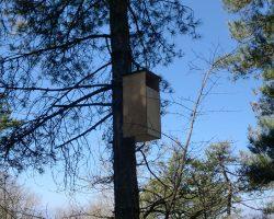 Caja nido de Cárabo común