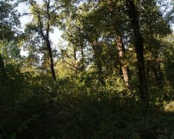 Sierra de Tajonar