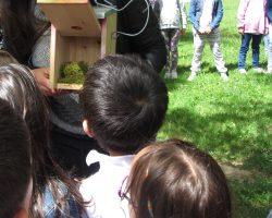 Taller de construcción de cajas nido 02